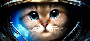catinspace